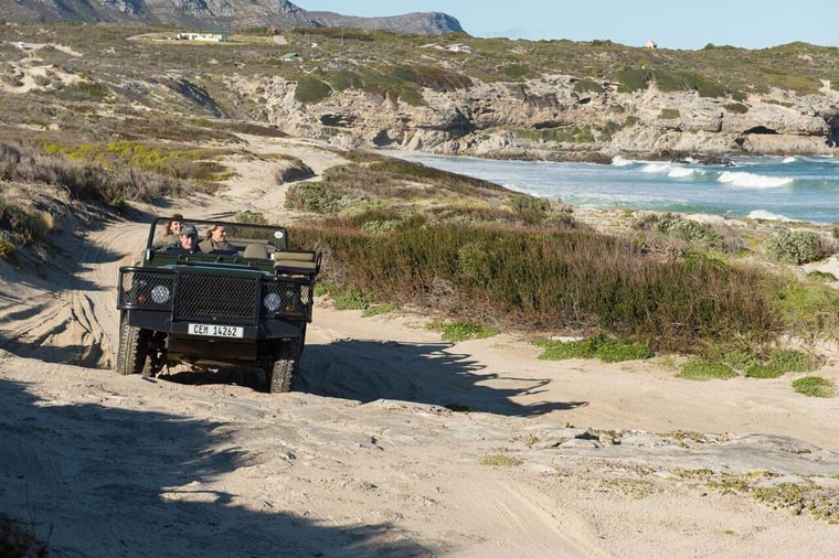 southafrica-hermanus-honeymoon-beach-bush-grootbos-naturedrive