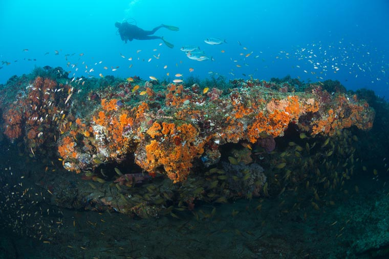 southafrica-underwater-adv-rocktail-scuba-coral