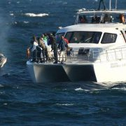 southafrica-whalecoast-ult-abalone-whale-boat