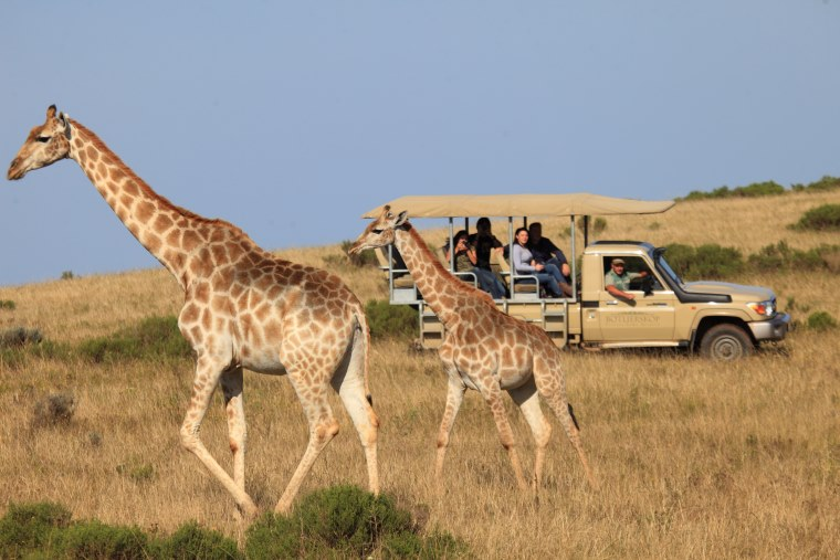 Game drive at Botlierskop Game Reserve